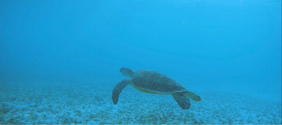 海洋生体調査