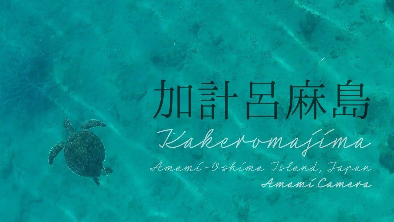 加計呂麻島のウミガメ